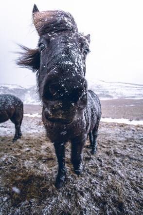 Hoe kan je het immuunsysteem van je paard ondersteunen?