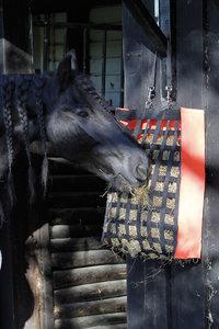Krijgt jouw paard voldoende ruwvoer?