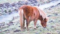 Je paard scheren – wat is het nut daarvan?